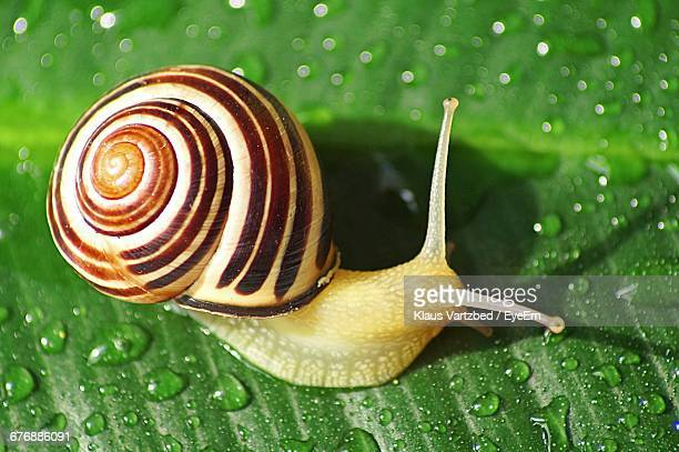 high angle view of snail on wet leaf - snail stock photos and pictures