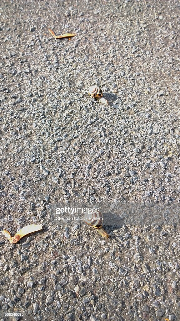 High Angle View Of Snails On Road : Stock Photo