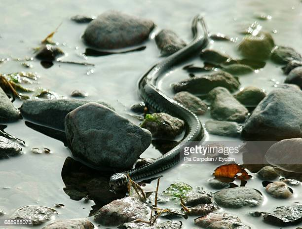 High Angle View Of Snake Amidst Rocks In Lake