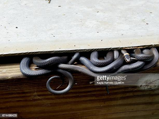 High Angle View Of Snakes In Wooden Container