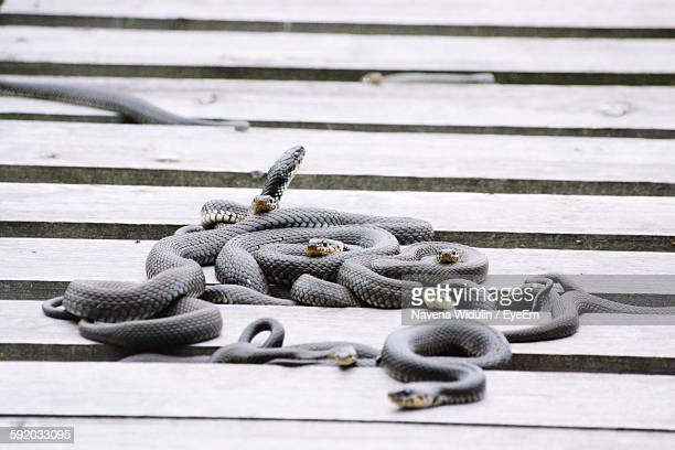 High Angle View Of Snakes On Floor