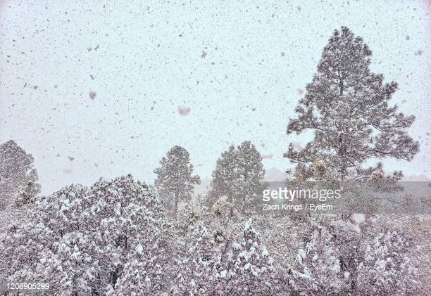 high angle view of snow and trees during winter - krings stock pictures, royalty-free photos & images