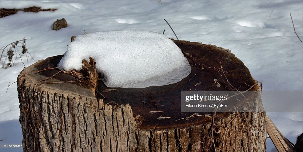 High Angle View Of Snow On Tree Stump : Stock Photo