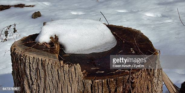high angle view of snow on tree stump - eileen kirsch stock pictures, royalty-free photos & images