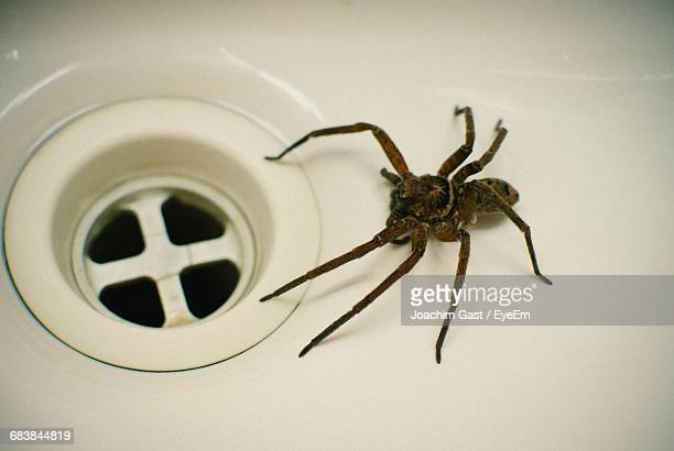 high angle view of spider in bathroom sink - spider stock pictures, royalty-free photos & images