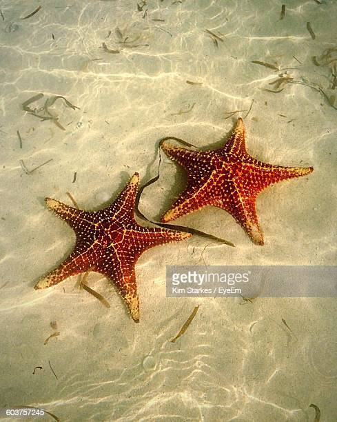 High Angle View Of Star Fishes In Sea