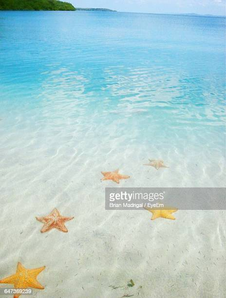 High Angle View Of Starfish In Sea
