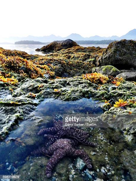 High Angle View Of Starfish In Tidal Pool