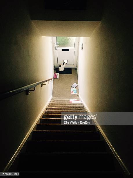High Angle View Of Steps Leading Towards Cat Standing By Door