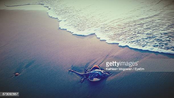 High Angle View Of Stingray On Sand At Shore
