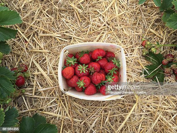 High Angle View Of Strawberries In Container On Field
