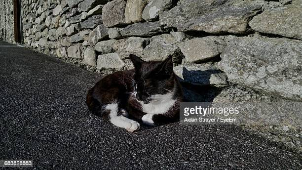 High Angle View Of Stray Cat Relaxing On Street Against Stone Wall Of House