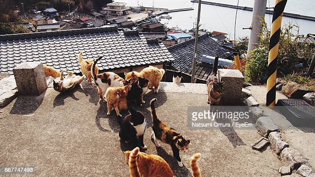 High Angle View Of Stray Cats On Building Terrace