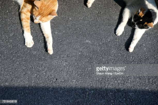 High Angle View Of Stray Cats On Road