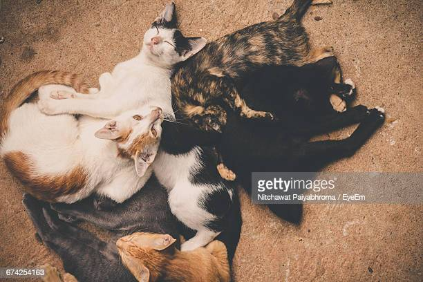 High Angle View Of Stray Cats Resting On Street