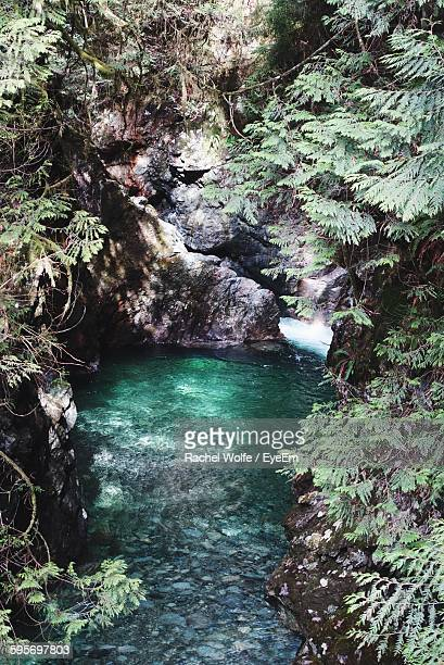 high angle view of stream amidst rock formation in rainforest - rachel wolfe stock pictures, royalty-free photos & images