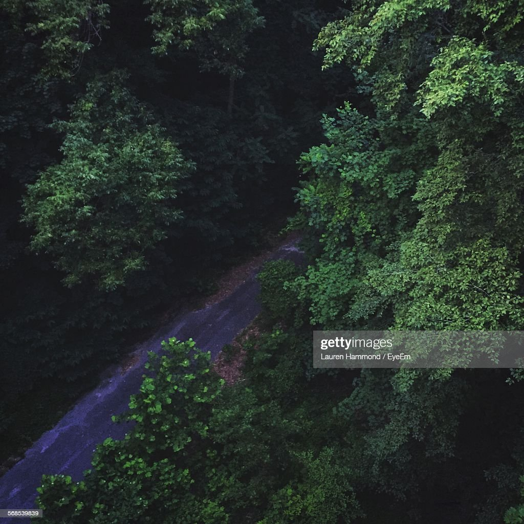 High Angle View Of Street Amidst Trees : Stock Photo