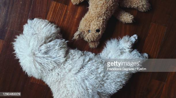 high angle view of stuffed toy - monza stock pictures, royalty-free photos & images