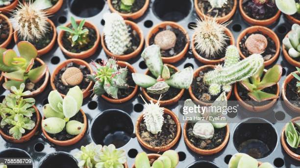 High Angle View Of Succulent Plants In Plug Tray Stock Photo