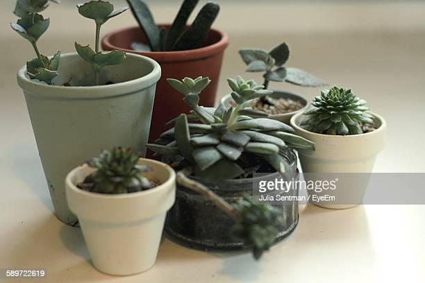 High Angle View Of Succulent Plants On Floor