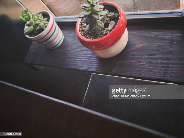 High Angle View Of Succulent Plants On Table