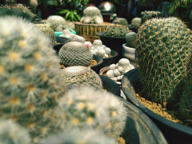 High Angle View Of Succulent Plants
