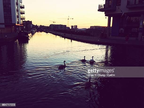 High Angle View Of Swans Swimming In Canal