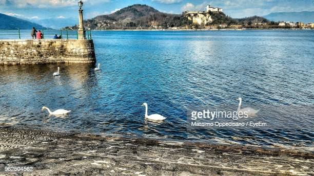 high angle view of swans swimming in lake - cinq animaux photos et images de collection