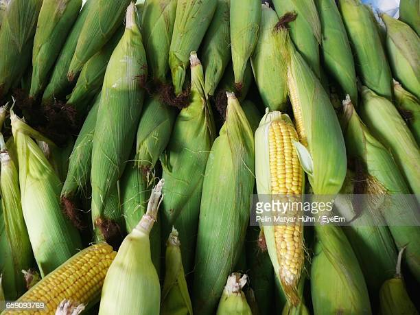 High Angle View Of Sweetcorns