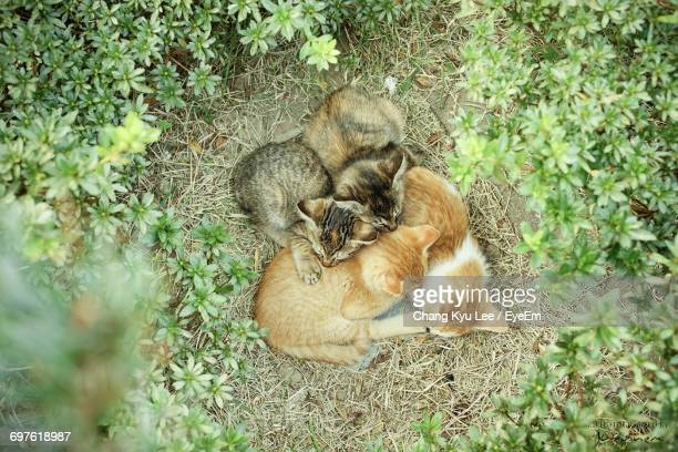 high angle view of tabby and ginger kittens sleeping amidst plants on field - ginger lee fotografías e imágenes de stock