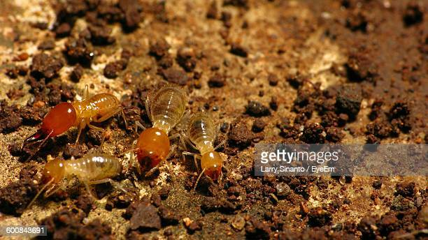 High Angle View Of Termites On Field