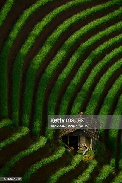 high angle view of terraced field - tian abdul hanip stock photos and pictures