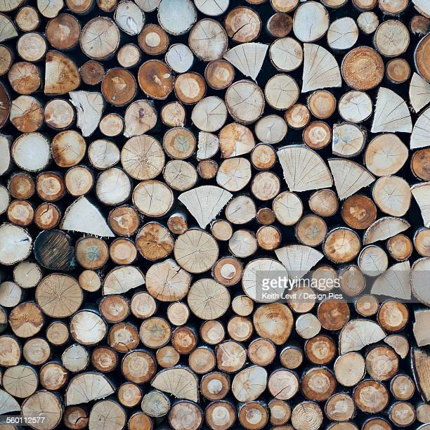 High angle view of the cut ends of logs