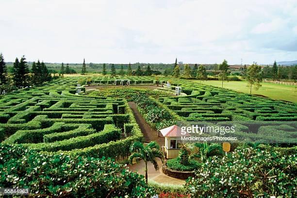 High angle view of the dole pineapple plantation, Oahu, Hawaii, USA