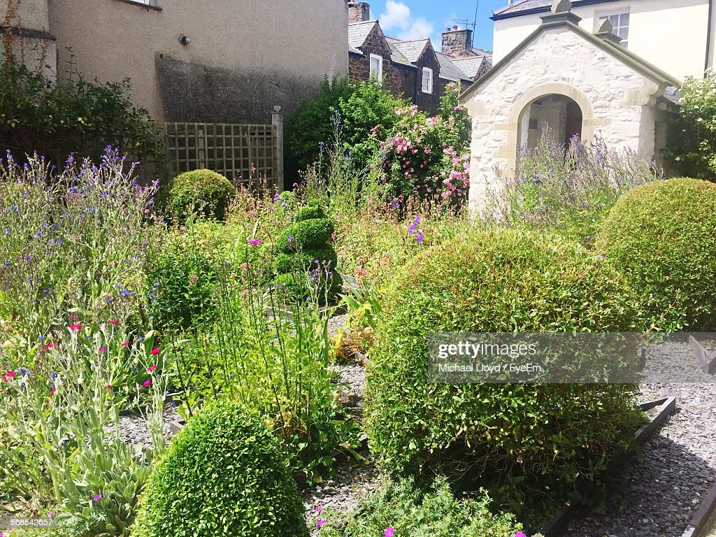 High Angle View Of Topiary Plants In Garden : Stock Photo