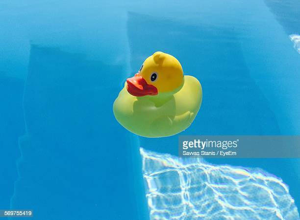 High Angle View Of Toy Duck On Swimming Pool