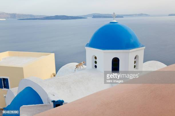 High angle view of traditional white washed church with bright blue dome on the island of Santorini, Greece.