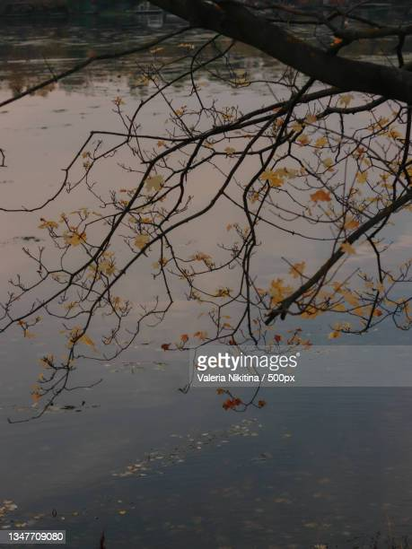 high angle view of tree by lake,russia - nikitina stock pictures, royalty-free photos & images