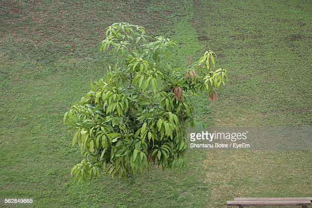 High Angle View Of Tree In Grassy Field
