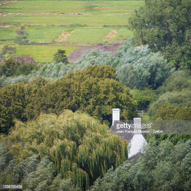 high angle view of trees and house in forest - damme stock pictures, royalty-free photos & images