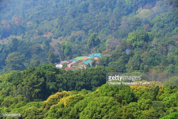 high angle view of trees and plants in forest - chatchai thalaikham stock pictures, royalty-free photos & images