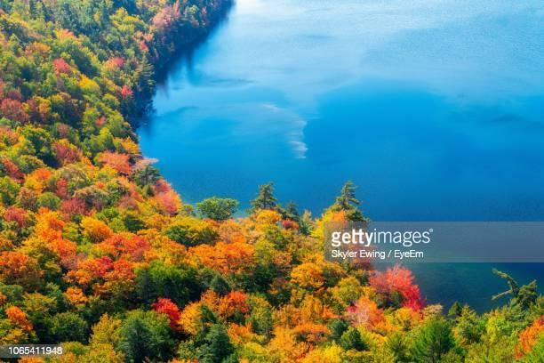 high angle view of trees during autumn - maine stock pictures, royalty-free photos & images