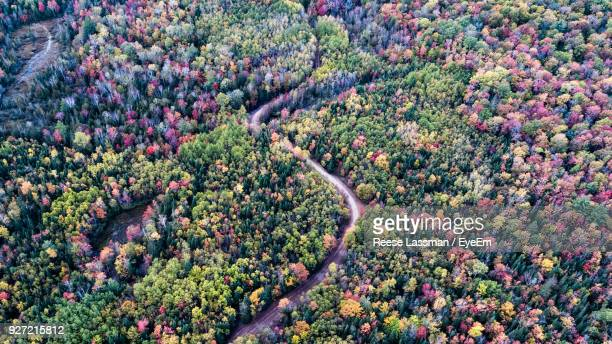 High Angle View Of Trees During Autumn