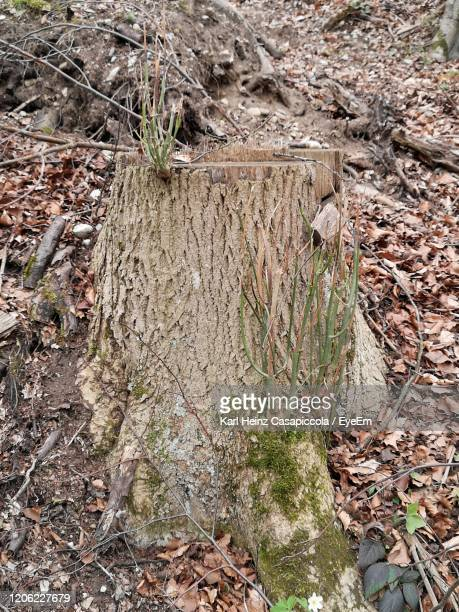 high angle view of trees growing in forest - casapiccola stock-fotos und bilder