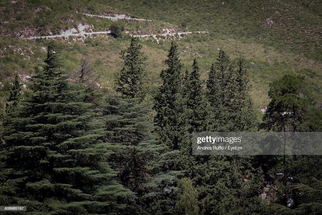 High Angle View Of Trees Growing On Field : Stock Photo