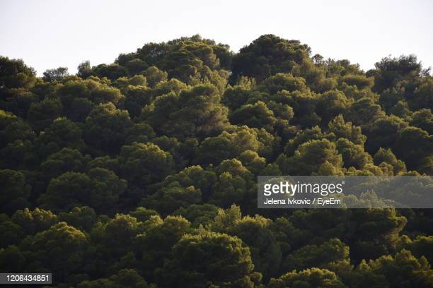 high angle view of trees in forest against sky - jelena ivkovic stock pictures, royalty-free photos & images