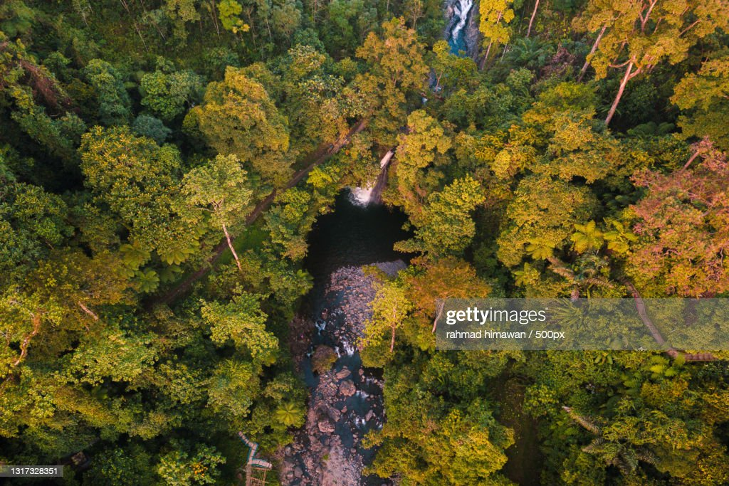 High angle view of trees in forest during autumn,Kemumu,Indonesia : Stock Photo