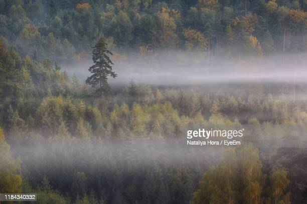 high angle view of trees in forest during foggy weather - ver a hora stockfoto's en -beelden