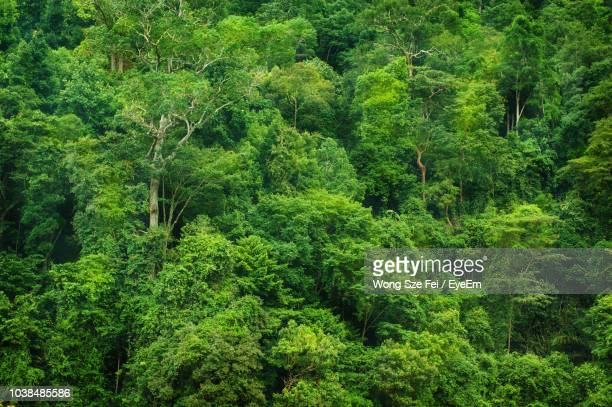 Worlds Best Tropical Rainforest Wallpaper Stock Pictures