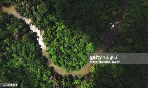 high angle view of trees in forest - rainforest stock pictures, royalty-free photos & images